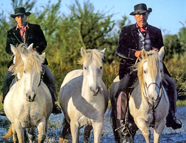 Camargue horses ridden by Gitan horesemen on our Southern France photo tour