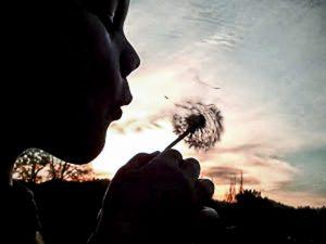 Goutierez Beautiful Wish 2