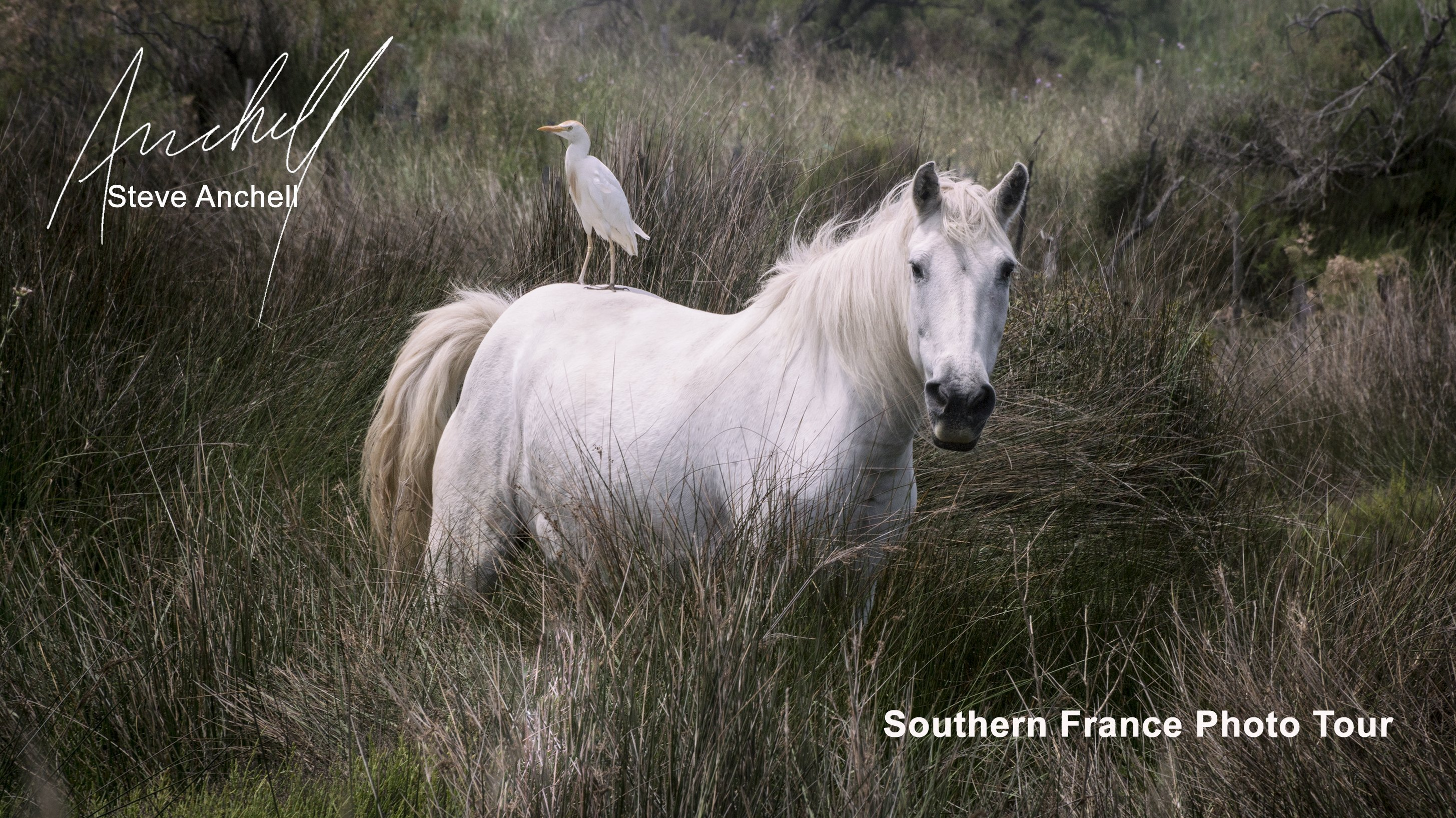 Camargue Horse - Provence - France